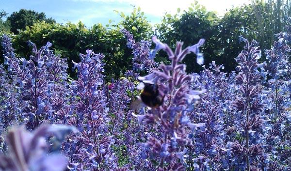 Brighton receives national bee award