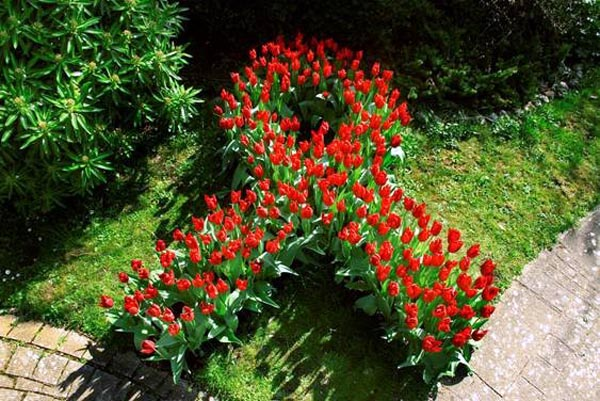 Local HIV charity plant red tulips to mark World Aids Day