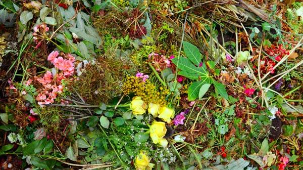 Demand grows for garden waste collection scheme