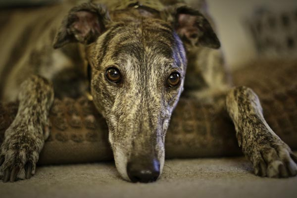 New charity single for Retired Greyhound Trust