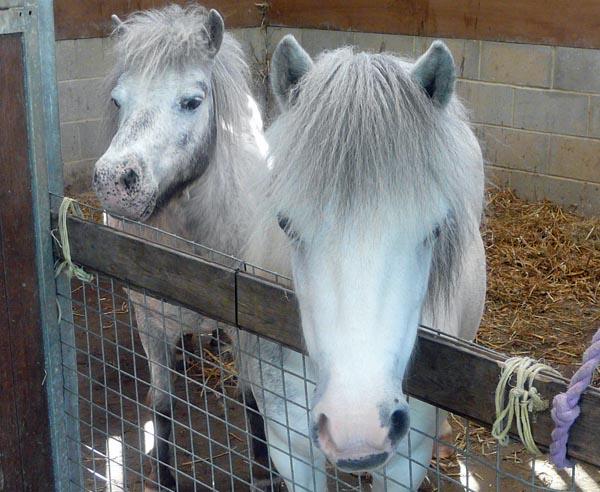 National Volunteers Week – Horse rescue centre needs volunteers