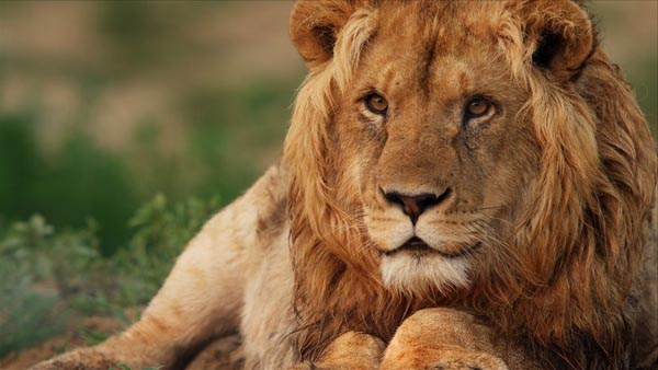 Rescue movie 'Lion Ark' roars into London for free screening