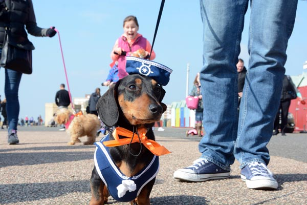 Pooches on the Prom returns on Hove seafront