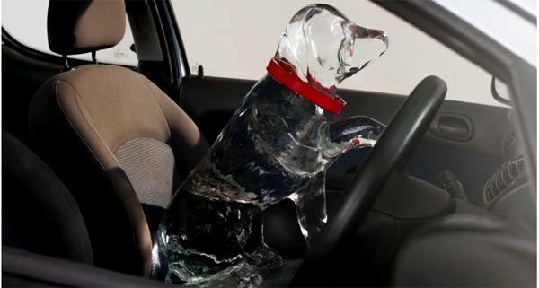 Enforcement officers join campaign to prevent dogs dying in hot cars