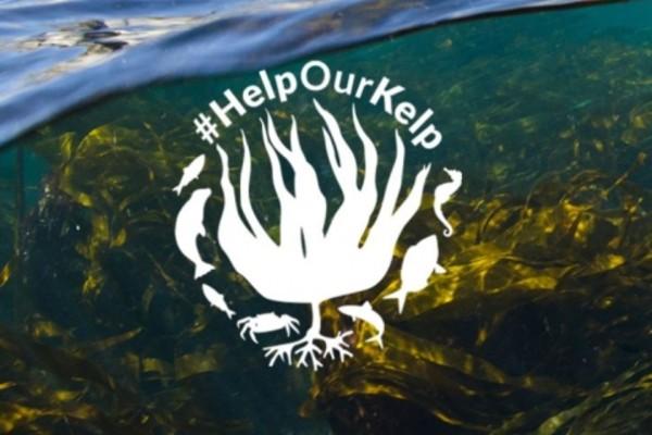 Help Our Kelp campaign achieves major milestone