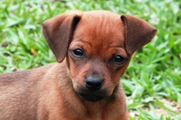 New law gives greater protection for animals