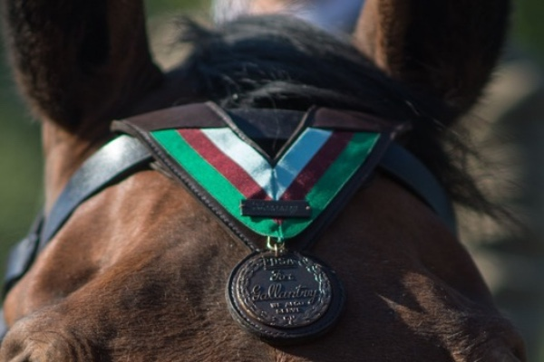 Heroic animals 'who also served' honoured this VE Day
